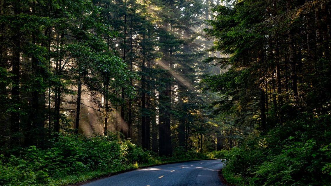 Výzva pre vlastníkov lesných pozemkov